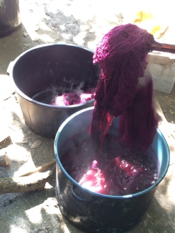 Cochineal coming out of the depot.